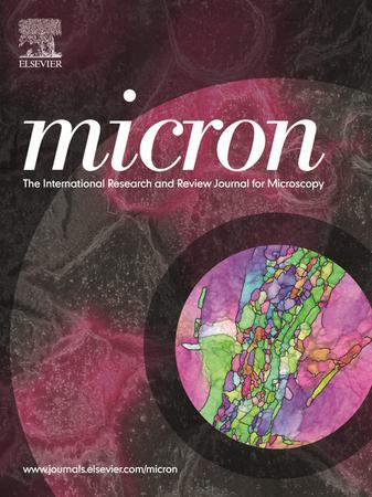 Micron template (Elsevier)