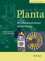 Planta template (Springer)