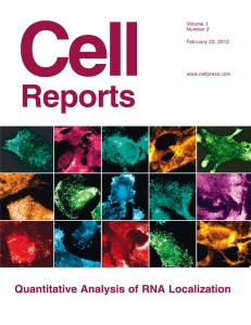 Cell Reports template (Elsevier)