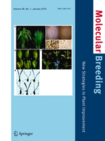 Molecular Breeding template (Springer)