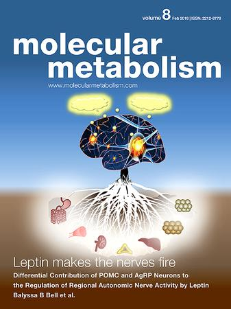 Molecular Metabolism template (Elsevier)