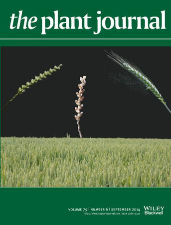 The Plant Journal template (Wiley)
