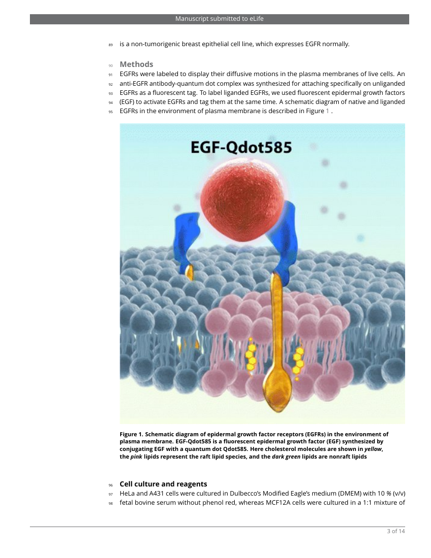 Example of Template for eLIFE articles format